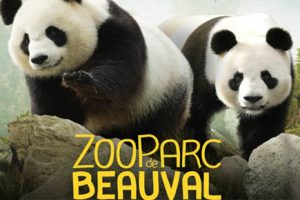 zoo-beauval-2